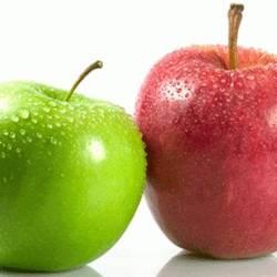 Elma Anaçları